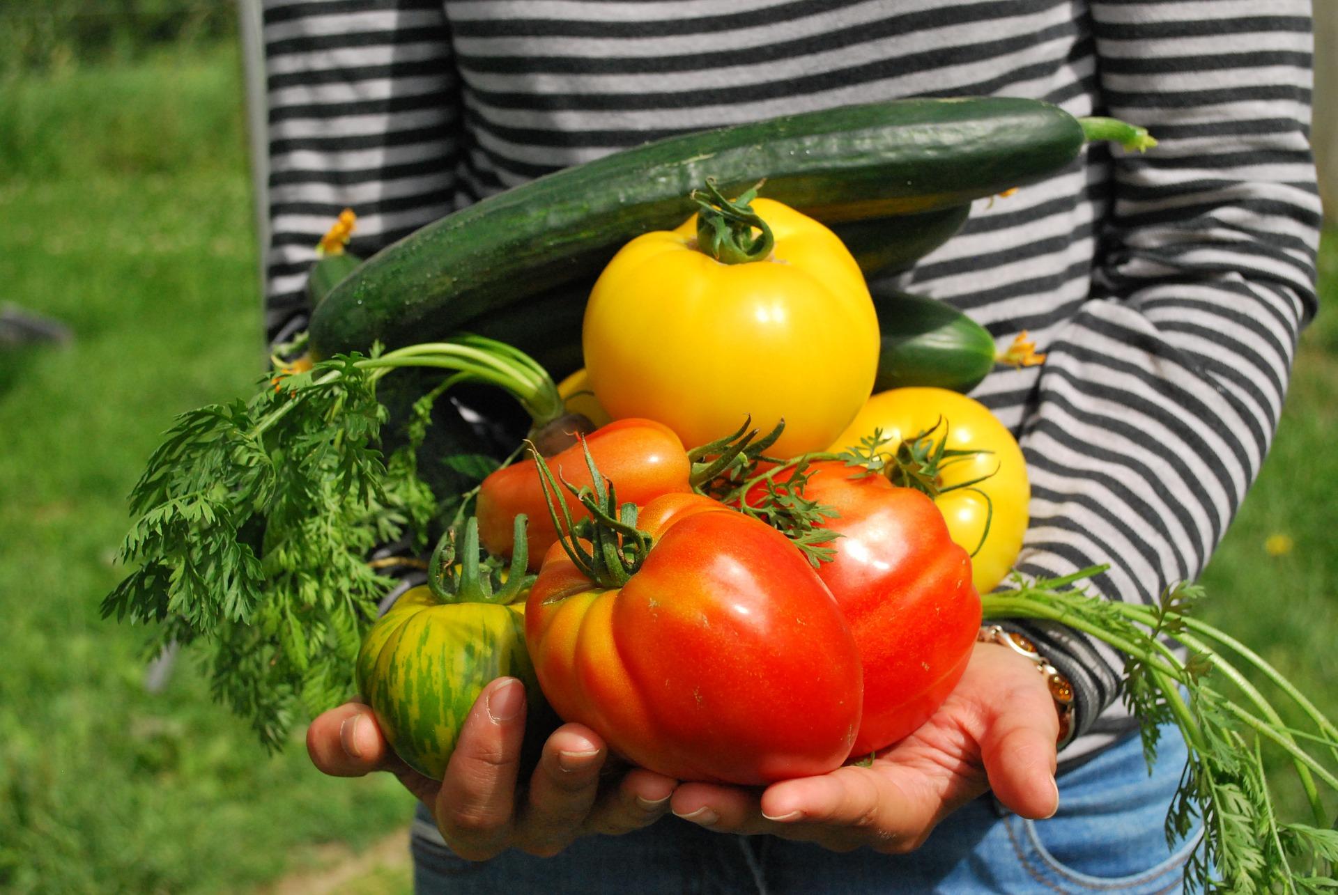 verduras_huerto